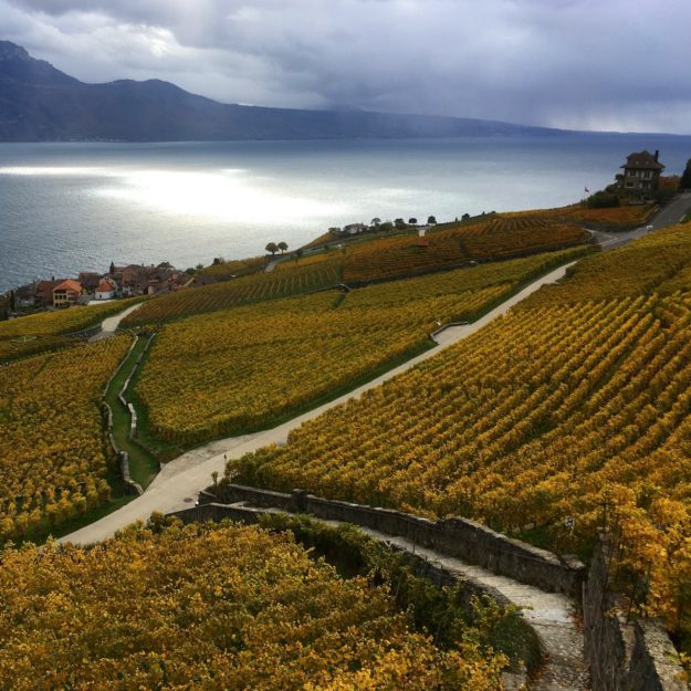 Forel Lavaux 18201 scaled